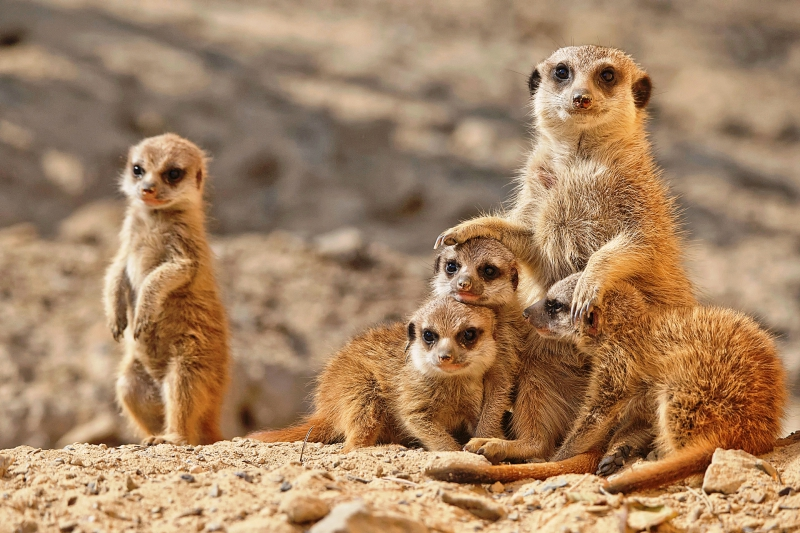 Tierpark Kostenlos